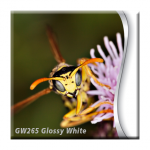 Tecco:Production GW265 Glossy